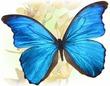 Прекрасное задание на 23.08 для Lady-butterfly!