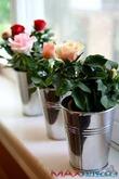 Из-за чего страдают комнатные розы зимой?
