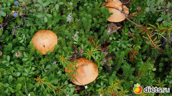 грибочки, альбом: Камчатская природа