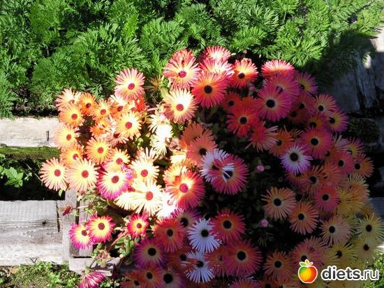 цветочки в моем садочке, альбом: Камчатская природа