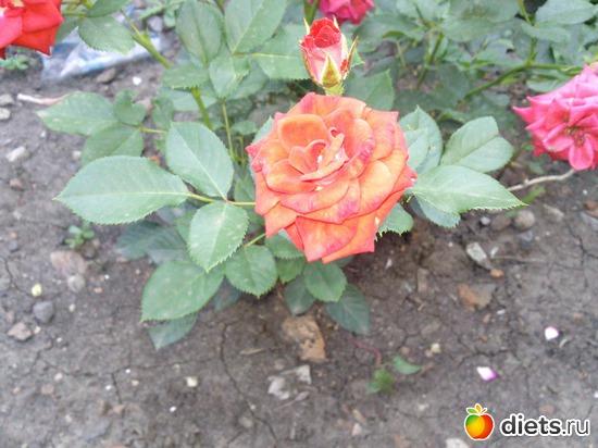 42 фото: Мои цветы.