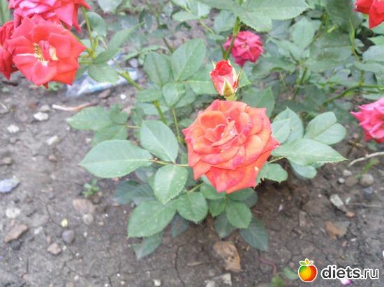 43 фото: Мои цветы.