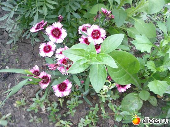 46 фото: Мои цветы.