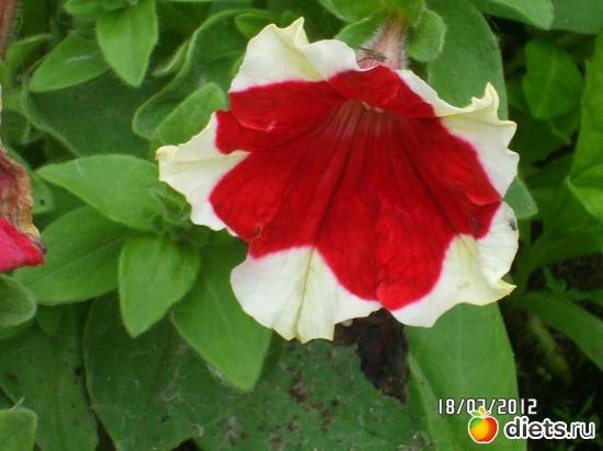3 фото: цветы