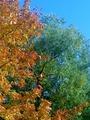 вышла каввык-то октябрьскввыим утром покурить на балкон,а там осень....
