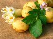 День картофеля!