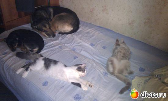 1 фото: животинки