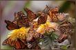 Леди-бабочки улыбаемся красоте - шаг 15!