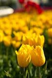 Весна - самое время найти себе пару