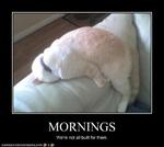 Постоянно не высыпаюсь!!! Что делать.?
