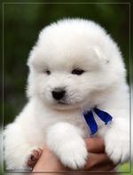 Нужен Ваш совет, владельцы маленьких собачек ))))))))))))))