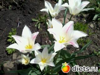 Мои цветы.
