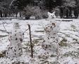 первый снег, снеговики
