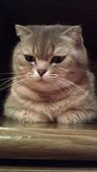 Девочка - кот (фото).