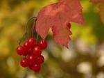 Польза и вкус: блюда из осенних ягод