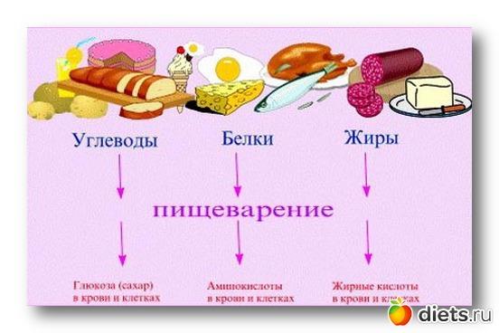 продукты содержащие белок для похудения