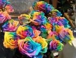 Разноцветные розы  Как покрасить розу
