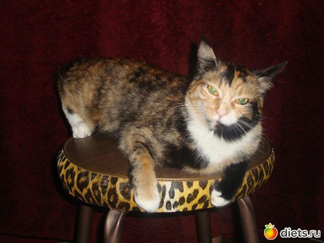 Кошка Клеопатра, альбом: Мои питомцы
