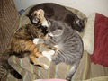 Кошки Миа и Клеопатра и Кот Коди