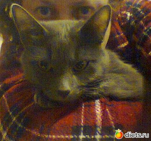 Кошка Мия