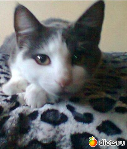 Кошка МилиМоо