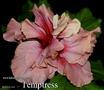 047 - Temptress