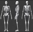 Анатомия позвоночника: будьте внимательны при занятиях йогой!