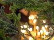 Необычные традиции новогодних праздников