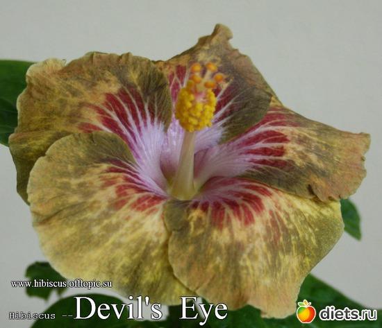 002 - Devil's Eye, альбом: My Gibiskus Gallery - 2O13