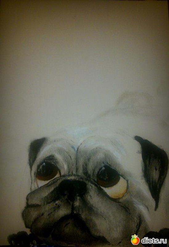 *Мопс*, карандаш, пастель, акрил, А4, альбом: Вернисаж картин Дарьи Тундры  (Дарья Калита)