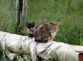 кошка с симпатичным котенком
