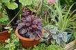 Защита и подкормки комнатных растений