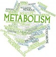 Метаболизм: как привести в норму обмен веществ?  Часть 2