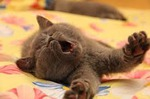 Кот спит...