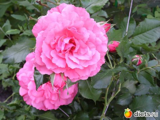 48 фото: Мои цветы.