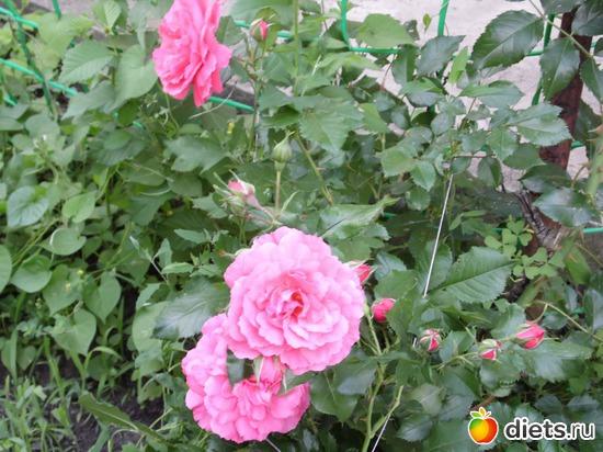 49 фото: Мои цветы.
