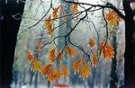 Не болей! Поздняя осень