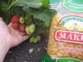 ягодки+ макароны -вот любимая еда в саду.