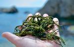 Поговорим о водорослях