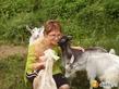 Сыр козий плавленый