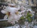 Весна торопится