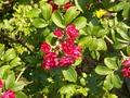 Красота розы в миниатюре.