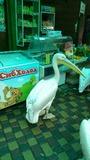 Пеликан на улице в Ялте