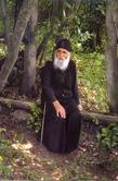 Притча старца Паисия Святогорца «Пчела и муха»