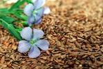 5 самых полезных орехов и семян для здоровья и стройности