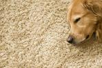 3 действенных способа чистки ковра в домашних условиях