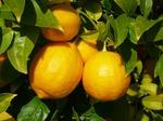 Сварите лимоны