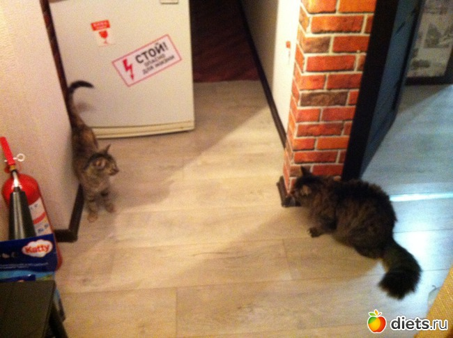 фото 2: Кот и Кошка. Хеппи энд? Еще не конец.