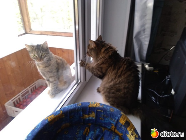 фото 1: Кот и Кошка. Хеппи энд? Еще не конец.