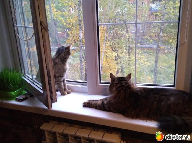 фото 1: Кот и Кошка. Хеппи? Энд?